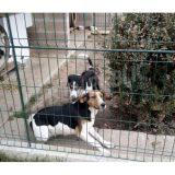 les-deux-chiennes-s-appellent-dora-et-iris-si-vous-les-voyez-prevenez-leur-maitre-sans-tenter-de-les-approcher-photo-rene-lonjaret-1508787589