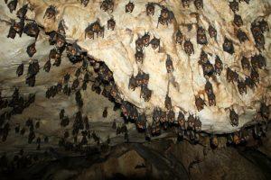 grotte-aux-chauve-souris-700-12811